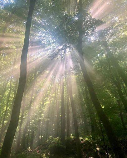 Последние штрихи «Ведьмака»: леса, кровь и грязь на новых фото