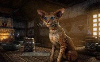 Убивай драконов в The Elder Scrolls Online и спасай котиков в реале
