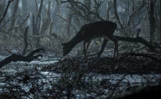 Новости сериалов: Геральт против кикиморы в деталях и Джеффри Дин Морган в «Пацанах»