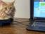 Обзор игрового ноутбука Predator Helios 300 от Acer