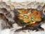 Total War: Three Kingdoms — О военачальниках рассказали в трейлере