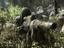 Call of Duty: Modern Warfare - Игра обойдется без Королевской битвы