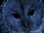 Werewolf: The Apocalypse – Heart of the Forest от создателей The Witcher оказалась адаптацией настолки