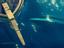 Sea of Thieves - Мегалодон уже успел вступить в бой