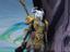 """World of Warcraft - Видеообзор дополнения """"Shadowlands"""" от разработчиков"""