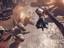 PlatinumGames обещают крупный анонс 1 апреля