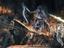 [Слухи] FromSoftware анонсирует новую игру на Е3