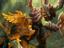 World of Warcraft Classic - Резервирование имен начнется через неделю