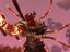 Обзор: ArcheAge - Новый топ квест локации Сад богов