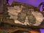 """EverQuest II - Норрат готовится отпраздновать """"Brewday"""""""