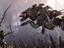 По Horizon Zero Dawn появится настольная игра