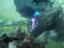 Guild Wars 2 — Планы разработчиков на 3 квартал