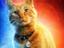 Кот Гусь стал главной звездой «Капитана Марвел»