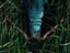 Трейлер «В высокой траве» от Netflix - экранизации повести Джо Хилла и Стивена Кинга