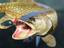 Fishing Planet - Русскоязычные игроки первыми получат доступ к новым водоёмам