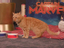 Звезда «Капитана Марвел» кот Гусь провел стрим