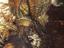 Monster Hunter: World - ПК-версия получила обновленные текстуры