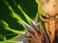 6 инди-игр в жанре roguelike, достойных вашего внимания