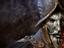 [Видео] MMORPG New World — фракции и война