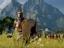 [SoG 2020] Total War Saga: Troy - Демонстрация элементов геймплея
