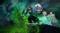 Guild Wars 2 — Начался второй бета-ивент новых элитных специализаций из дополнения End of Dragons